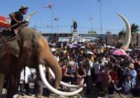 elephant-food